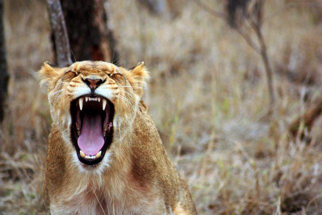 Expressing Anger